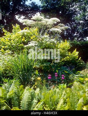 Riesige Hog Unkraut in Merriments Gardens - Stockfoto
