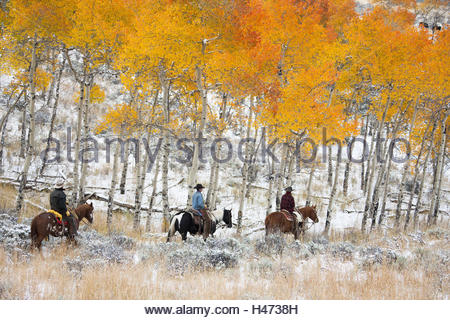 Cowboys, Reiten, Pappel-Wald, Herbst, USA, Wyoming, Shell, - Stockfoto