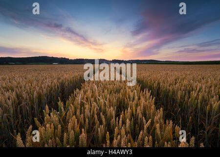 Deutschland, Bayern, Feld, Weizen, Getreide, Stimmung, Abend, Wolken, Licht, Sommer, Juli, Farben, Paradies, Panorama, Stockfoto