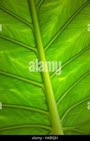 Blatt, Flora, Pflanzen, detail - Stockfoto