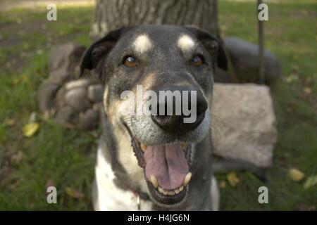 RU-Hund lachen - Stockfoto