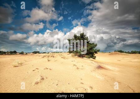 schönen bewölkten Himmel über Sanddünen und Kiefer - Stockfoto