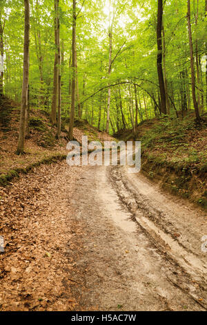 l ss schlucht stockfoto bild 24709007 alamy. Black Bedroom Furniture Sets. Home Design Ideas