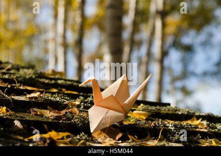 Creme farbigen Kran in einem Birkenholz - Stockfoto