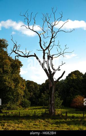 Toter Baum mit blauem Himmel - Stockfoto