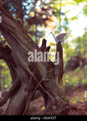 Origami Papier Kran sitzt auf einem getrockneten Baum im Herbst Natur Landschaft - Stockfoto