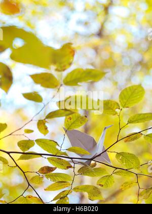Origami Papier Kran auf einem Ast mit gelben Blättern im Herbst Natur - Stockfoto