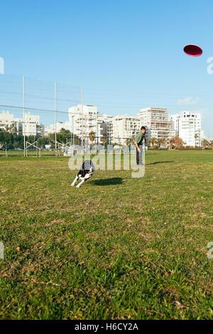 Ein Border-Collie Hund Spaß spielen Frisbee mit seinem Besitzer im Park an einem sonnigen Tag. - Stockfoto