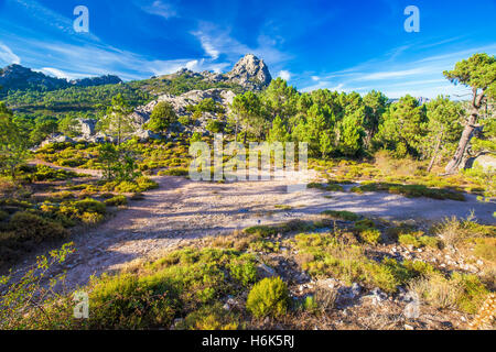 Kiefern im Col de Bavella Gebirge, Korsika, Frankreich, Europa. - Stockfoto