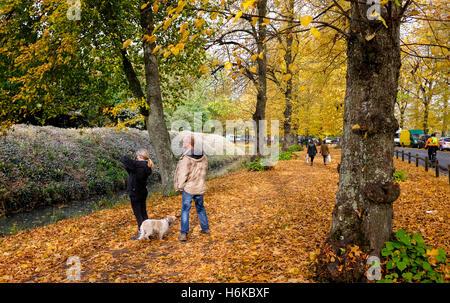 Arundel Sussex UK 30. Oktober 2016 - Menschen genießen Sie einen Spaziergang durch eine Allee von Bäumen in Arundel - Stockfoto