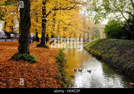 Arundel Sussex UK 30. Oktober 2016 - eine Allee von Bäumen, schöne Herbst-Farben in Arundel zeigen, wie das ungewöhnlich - Stockfoto