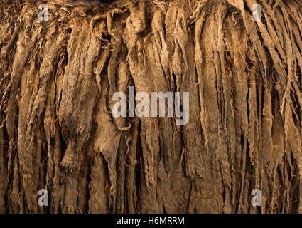 Details zu ein Poitou-Esel-Dreadlocks-Haare - Stockfoto