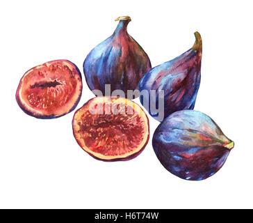 Zusammensetzung ganz frische Feigen und Feigen in Scheiben geschnitten in Hälfte zeigt das rote Fruchtfleisch und Samen im Inneren. Aquarell Hand Malerei illustrati