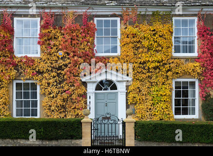 Wildem Wein / American Efeu und Klettern Hydrangea auf ein Haus in Broadway, Cotswolds, Worcestershire, England - Stockfoto