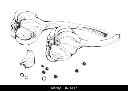 Knoblauch. Hand gezeichnet schwarz / weiß Darstellung Gemüse auf weißem Hintergrund. - Stockfoto