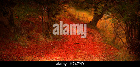 Herbst Zauber Straße in den geheimnisvollen Wald - Stockfoto