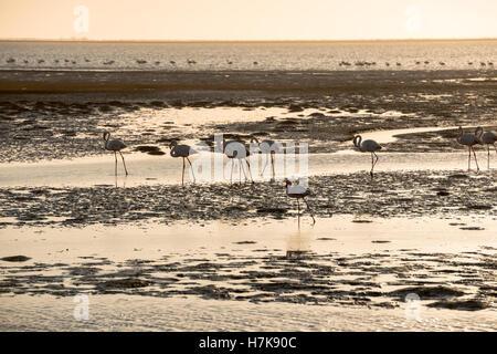 Ein getöntes Bild von Flamingo Silhouetten voran Atlantik Untiefen in Walvis Bay der namibischen Küste - Stockfoto