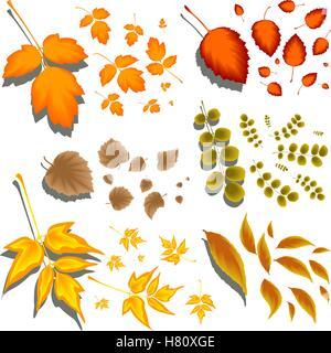 Herbstlaub in verschiedenen Formen und verschiedenen Bäumen - Stockfoto