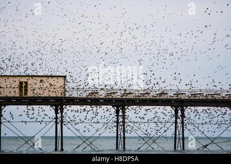 Aberystwyth Wales UK, Freitag, 11. November 2016 UK Wetter: an einem grauen trüben Abend, mit starkem Regen Prognose - Stockfoto