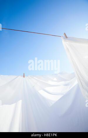 Saubere weiße Blätter trocknen in der Sonne. - Stockfoto