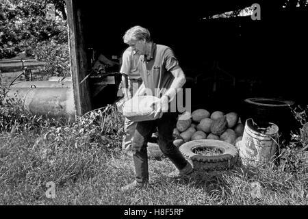 Präsident Jimmy Carter schneidet Wassermelonen auf seinem Bauernhof Land in Plains, Georgia mit einem Mieter Landwirt, - Stockfoto