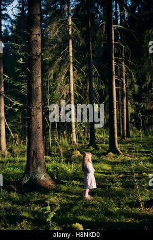 Mädchen (4-5) steht im Fichtenwald - Stockfoto