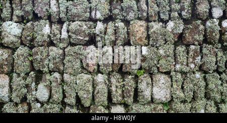 Eine cornish absicherung eine trockensteinmauer gef llt for Boden great britain