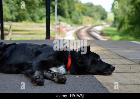 Hund schläft auf Bahnhof Bahnsteig, Greenway Einhalt zu Gebieten, Dartmouth Steam Railway, Devon - Stockfoto