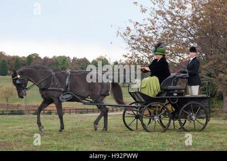 Frau und damit verbundenen treibenden Morgan Stute mit Kutsche - Stockfoto