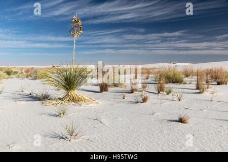 Sanddünen und Yucca-Pflanzen im White Sands National Monument in der Nähe von Alamogordo, New Mexico, USA - Stockfoto