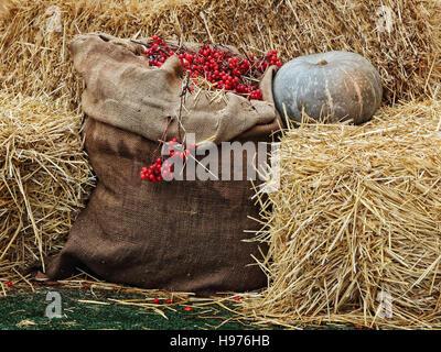 Thanksgiving-Anzeige von Kürbis auf Heu stapeln und Leinensack mit roten Beeren. - Stockfoto