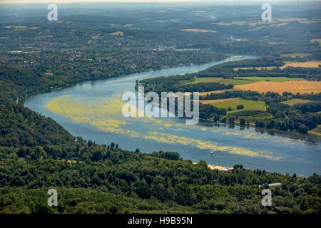 Antenne zu sehen, Schilfen Elodea, See Baldeney, Essen, Ruhr District, North Rhine-Westphalia, Deutschland - Stockfoto