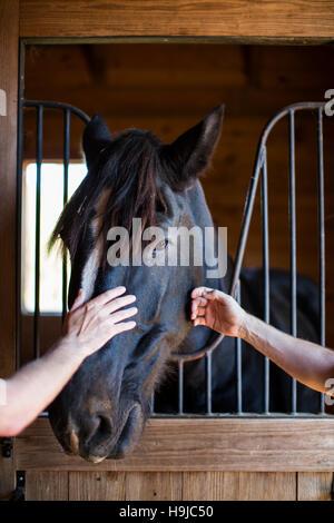 Zwei Personen streicheln ein schwarzes Pferd im Stall. - Stockfoto