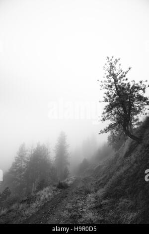 Krummen Baum an einem Hang im Nebel - Stockfoto