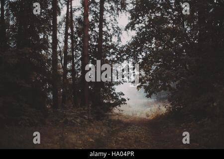 Nebligen Morgen in den Wald Gehweg, welche Ausgänge zum hellen Wiese, gefüllt mit Nebel, Pinien, überall, Sommer - Stockfoto