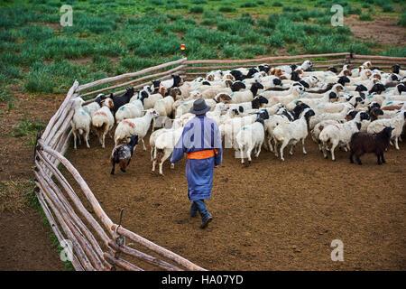 Mongolei, Provinz Arkhangai, Nomadencamp, Schafherde - Stockfoto