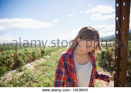 Mädchen auf der Suche nach unten im sonnigen ländlichen Ernte Feld - Stockfoto