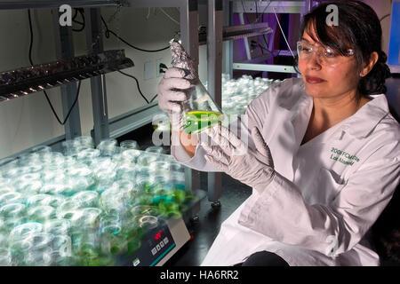 Losalamosnatlab 21016318409 wächst eine grünere Zukunft mit Algen Biokraftstoffe - Stockfoto