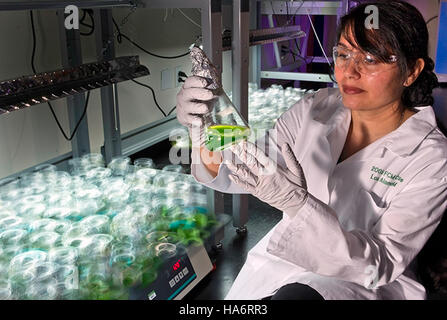Losalamosnatlab 21016318989 wächst eine grünere Zukunft mit Algen Biokraftstoffe - Stockfoto