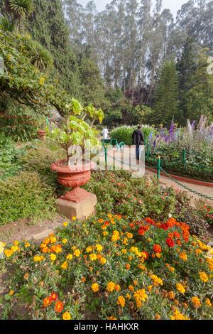 Regierung botanischen Gärten, Ooty, in Udhagamandalam, in der Nähe von Coimbatore(Ooty), Tamil Nadu state, Indien - Stockfoto
