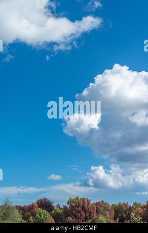Cumulus-Wolken vor blauem Himmel im Herbst - Stockfoto