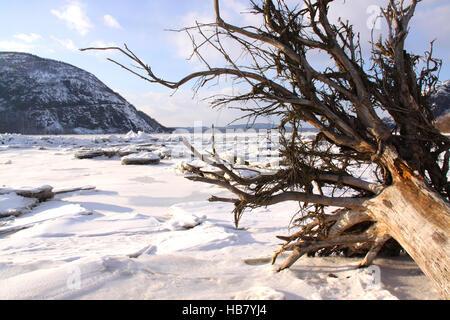 Flusslandschaft mit einen umstürzenden Baum in kleinen Stony Point Park, Hudson River Valley, NY, Vereinigte Staaten - Stockfoto