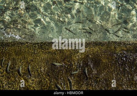 Fische im Meer - Stockfoto