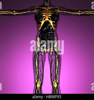 Wissenschaft-Anatomie des menschlichen Körpers im Röntgenbild mit Leuchten Skelette Knochen - Stockfoto