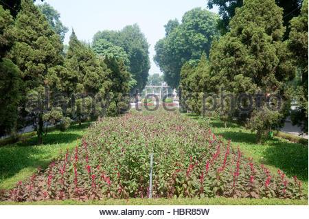 Hanoi Vietnam Thong Nhat Park grenzt Gomphrena Globosa - Globus Amaranth oder Bachelor-Taste - Stockfoto