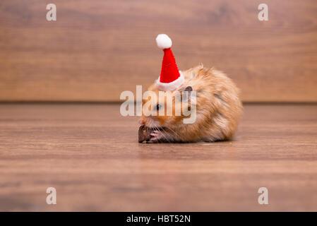 Niedliche Hamster mit Weihnachtsmütze auf dem Tisch - Stockfoto