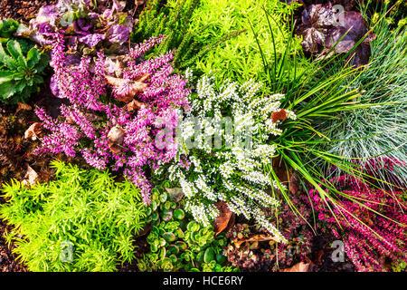 blumenbeet mit rosa und wei en heidekraut bl ten herbst arrangement floraler hintergrund grab. Black Bedroom Furniture Sets. Home Design Ideas