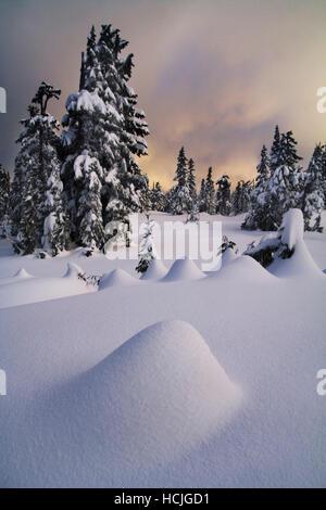 Sonnenuntergang über Red Heather Wiesen im Winter, Garibaldi Provincial Park in British Columbia, Kanada. - Stockfoto