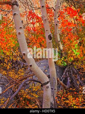 Überdachung-Farben des Herbstes - Stockfoto