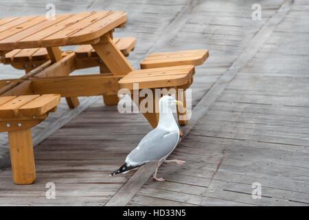 Möwe auf Eastbourne Pier und zeigt die Möwe zu Fuß auf den Holzboden in der Nähe von einem Woodnen-Picknick-Tisch - Stockfoto